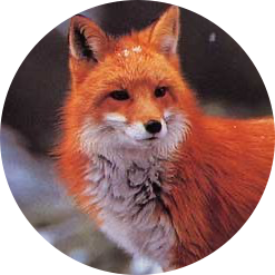 avatar for Renard Rouge